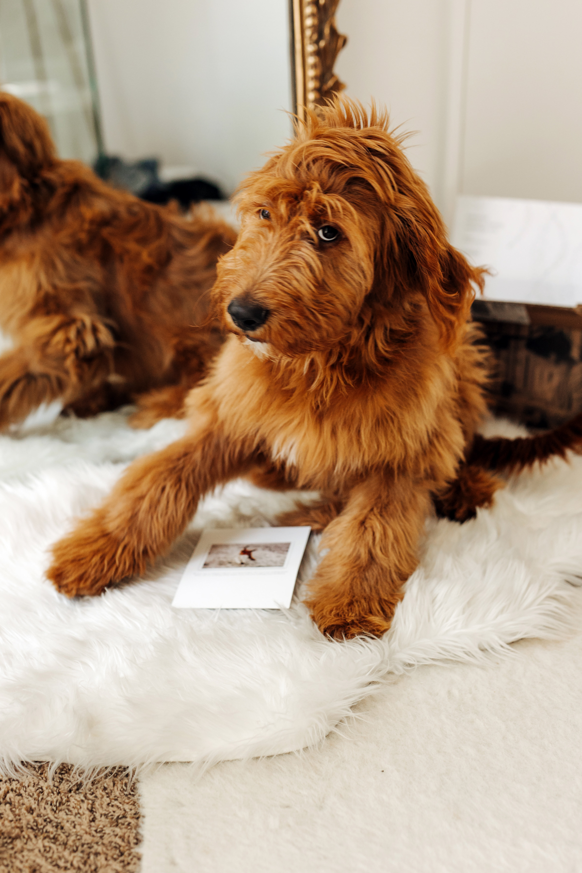 Fashion Jackson Minted Save the Dates and Bear the Golden Doodle