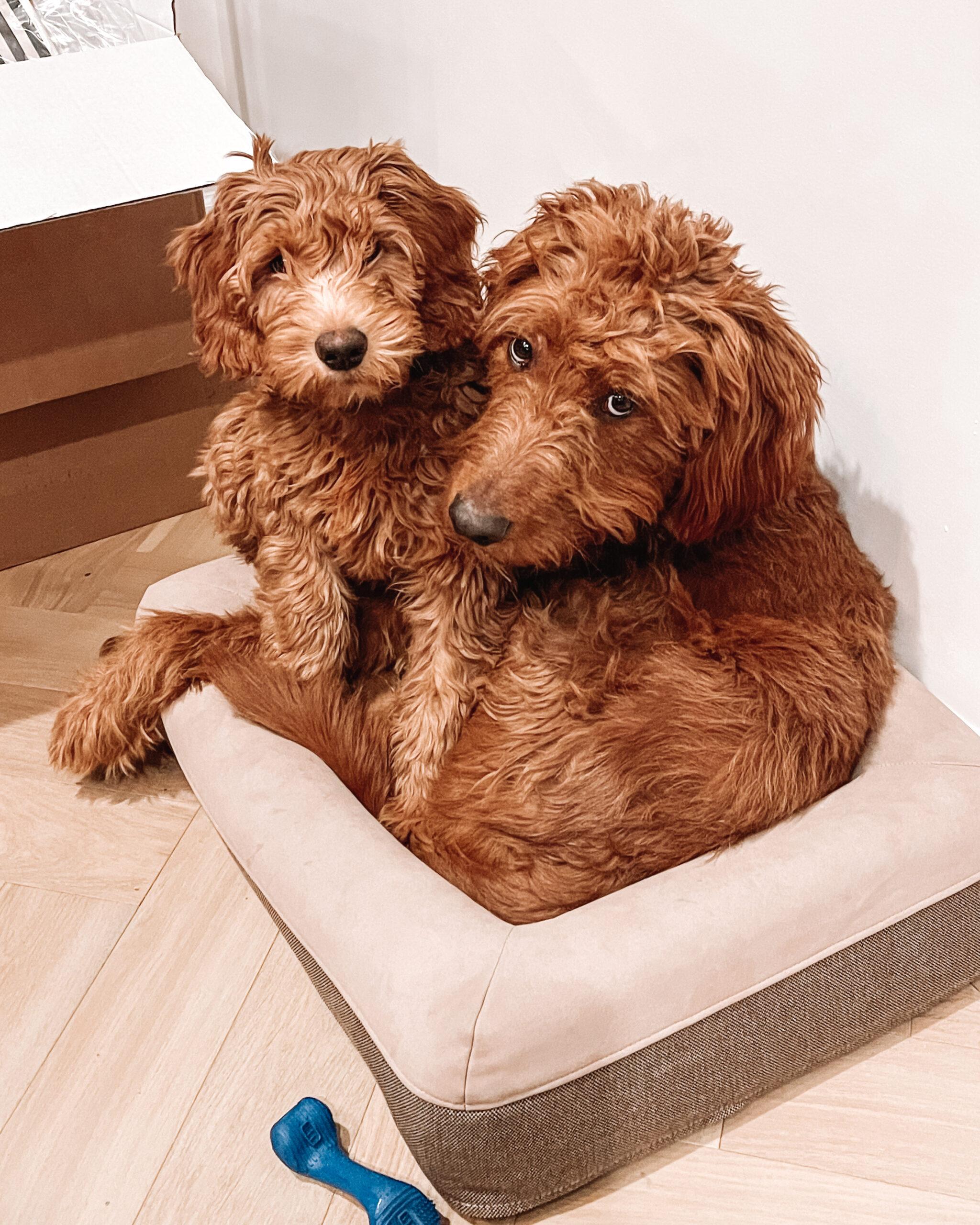 amazon casper dog bed